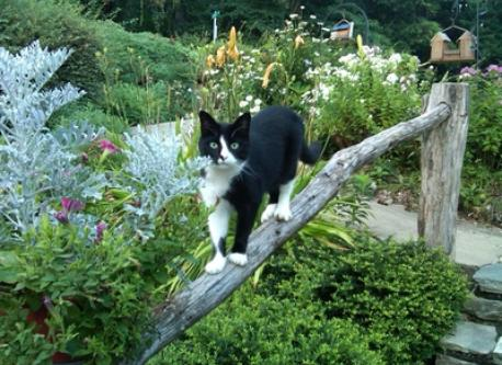 One of the cats in the front garden