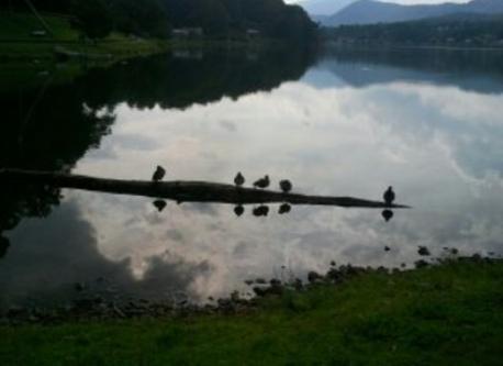 Ducks on nearby Lake Junaluska