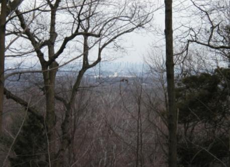 View from the top of our property