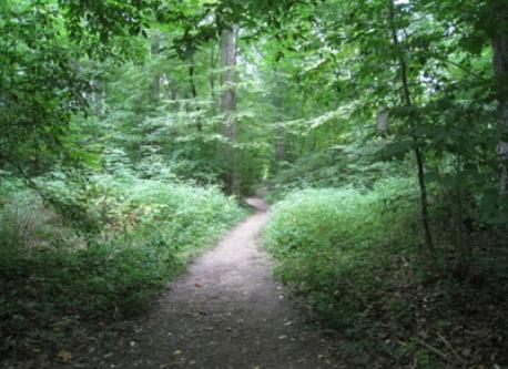 hiking trail at Spangler park nearby