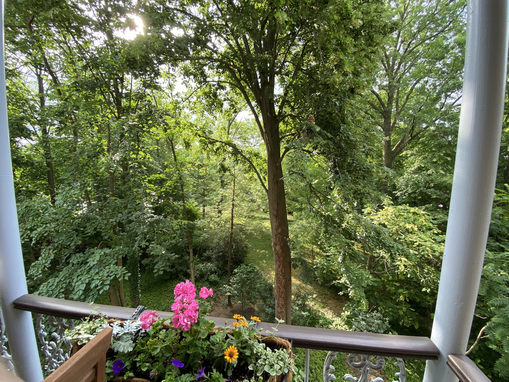 Balcony view of bird sanctuary