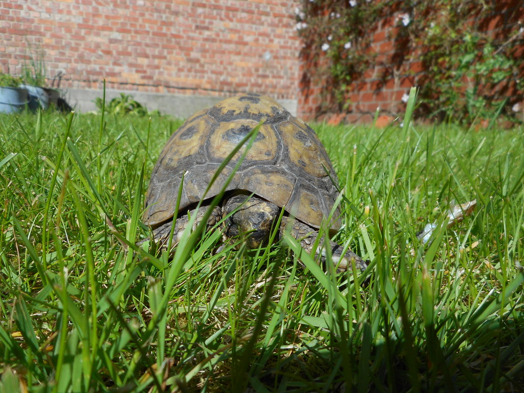 Our turtle/ Notre tortue