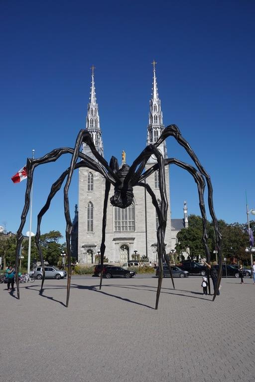 Ottawa's favourite spider!