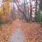 Ozzie's trail,