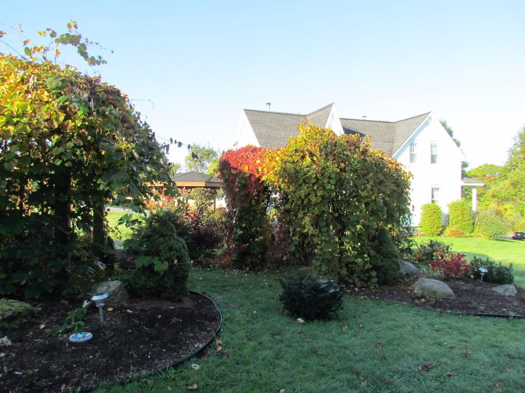 Yard and pergolas