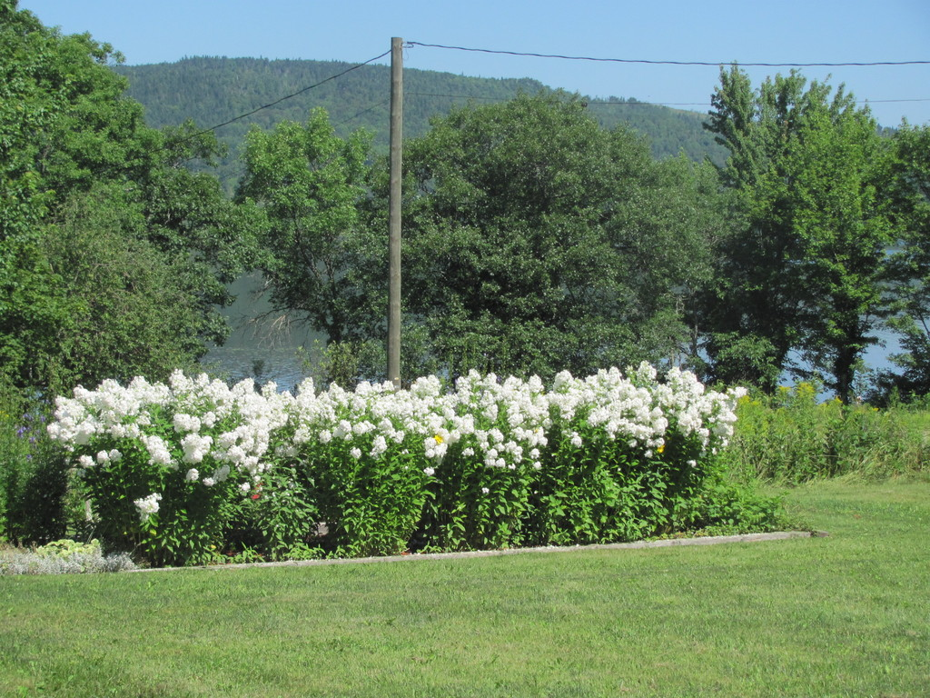 one of flower gardens