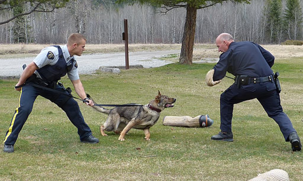 Royal Canadian Mounted Police - K9 training centre, free public shows every Wednesday.