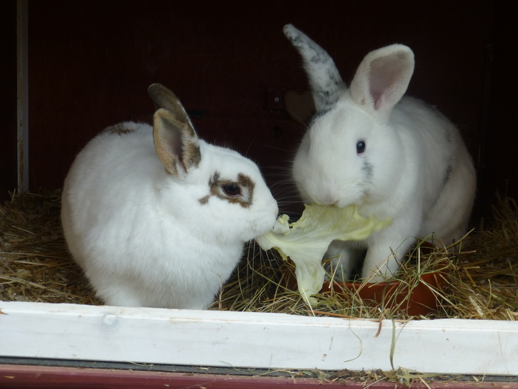 Fridolin und Mümmel wohnen draussen  im Garten.