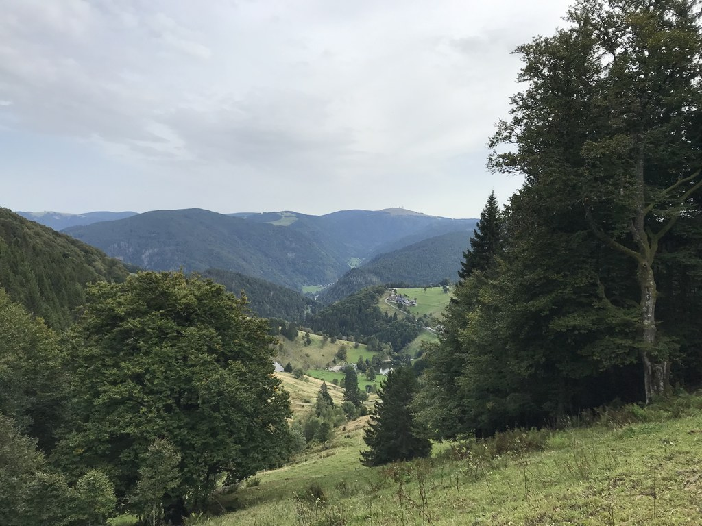 View of Feldberg (1493 m) in the background, highest elevation in the Black Forest