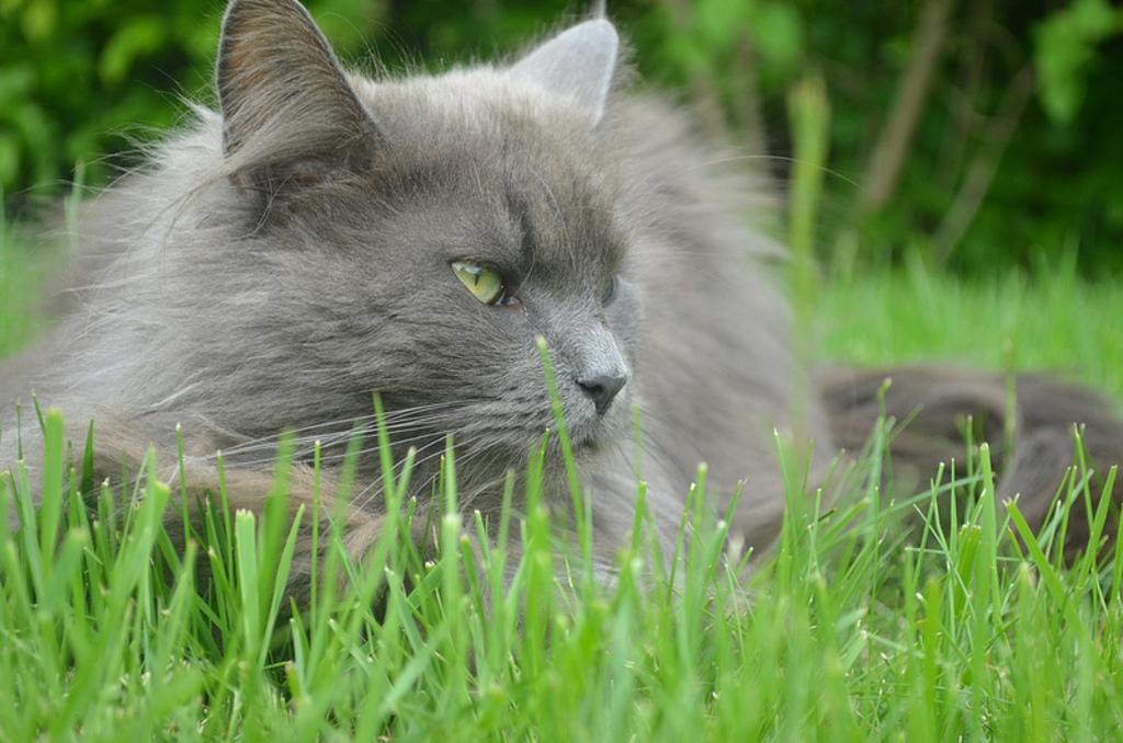 """Our cat """"Asha"""""""
