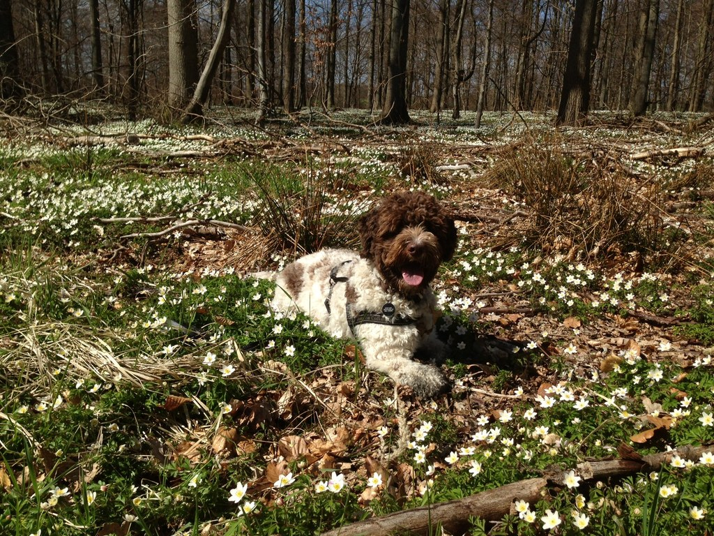 Otto in the spring
