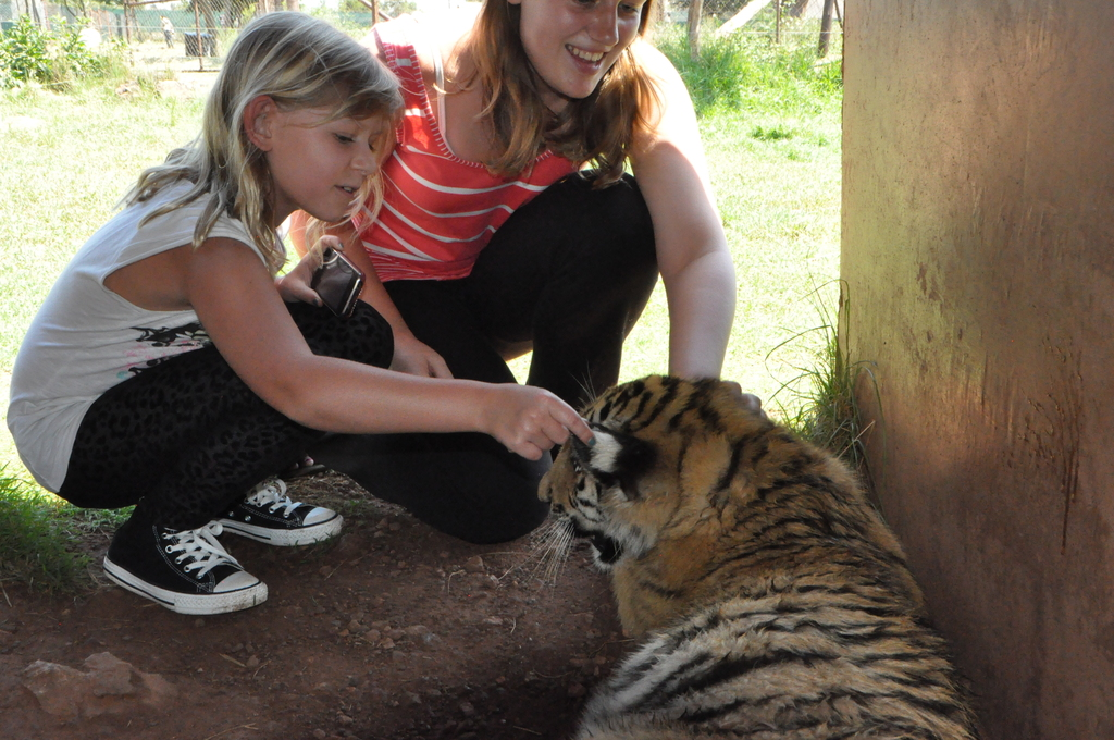 Playing with a tiger