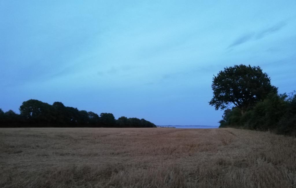Ørbyhage, an evening in August.