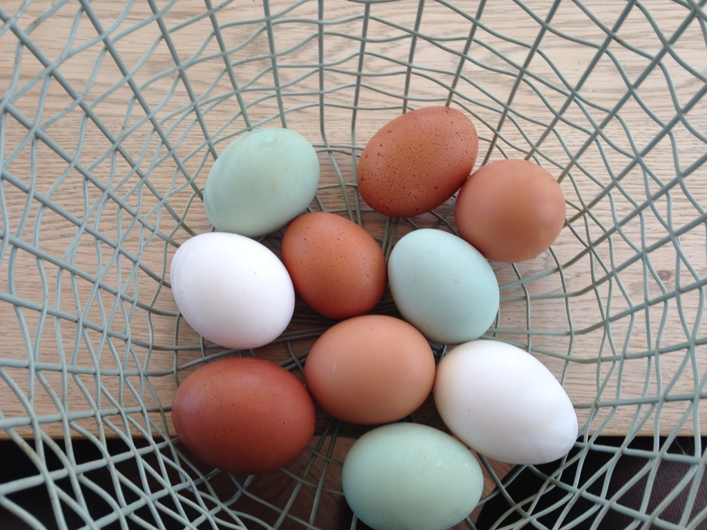 Fresh eggs every day.