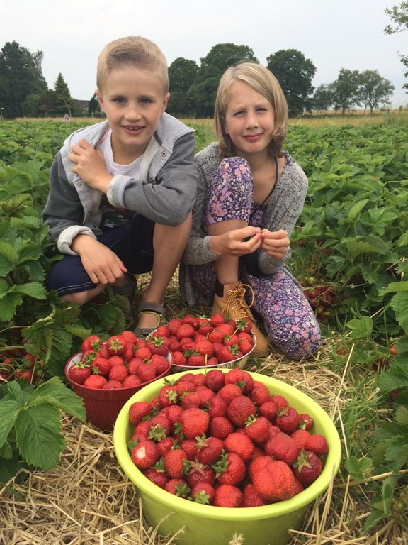 Picking strawberries in Århus🍓