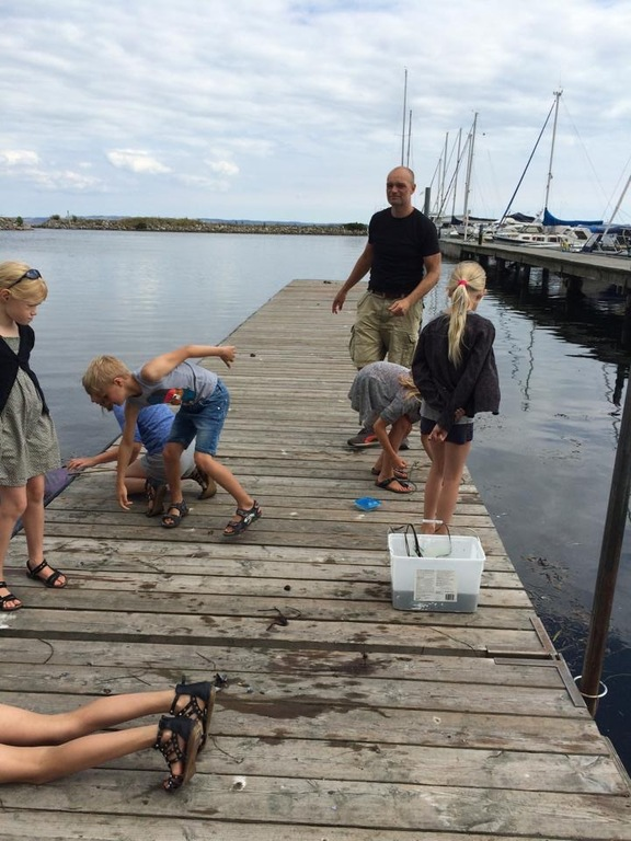 Catching crabs in Skærring