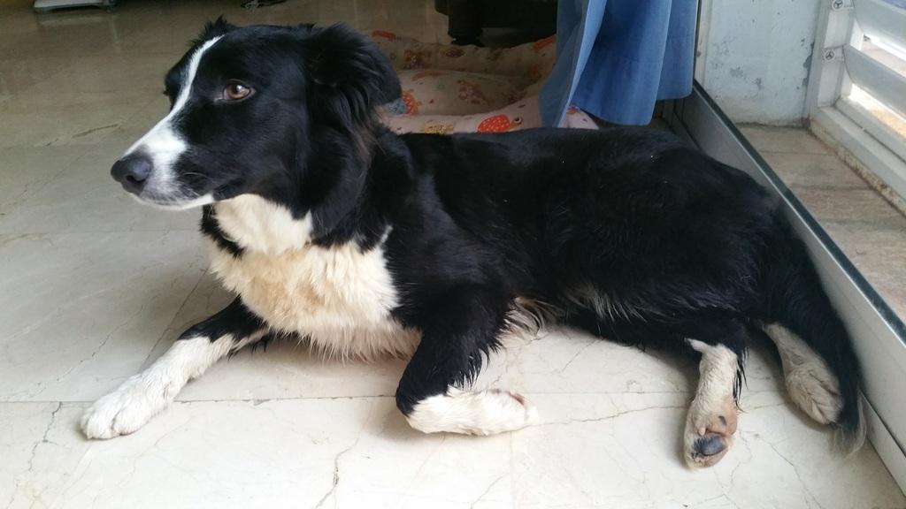 Our dog, Lisa