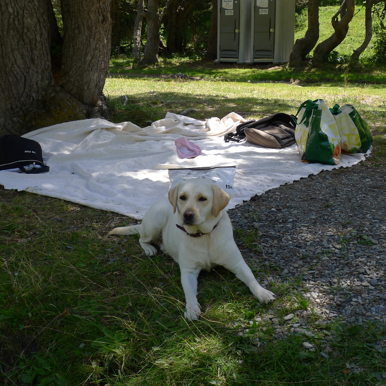 Picnic in river side with Zuri (our dog)