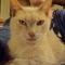 Minouche 14 years old cat. It's cute !