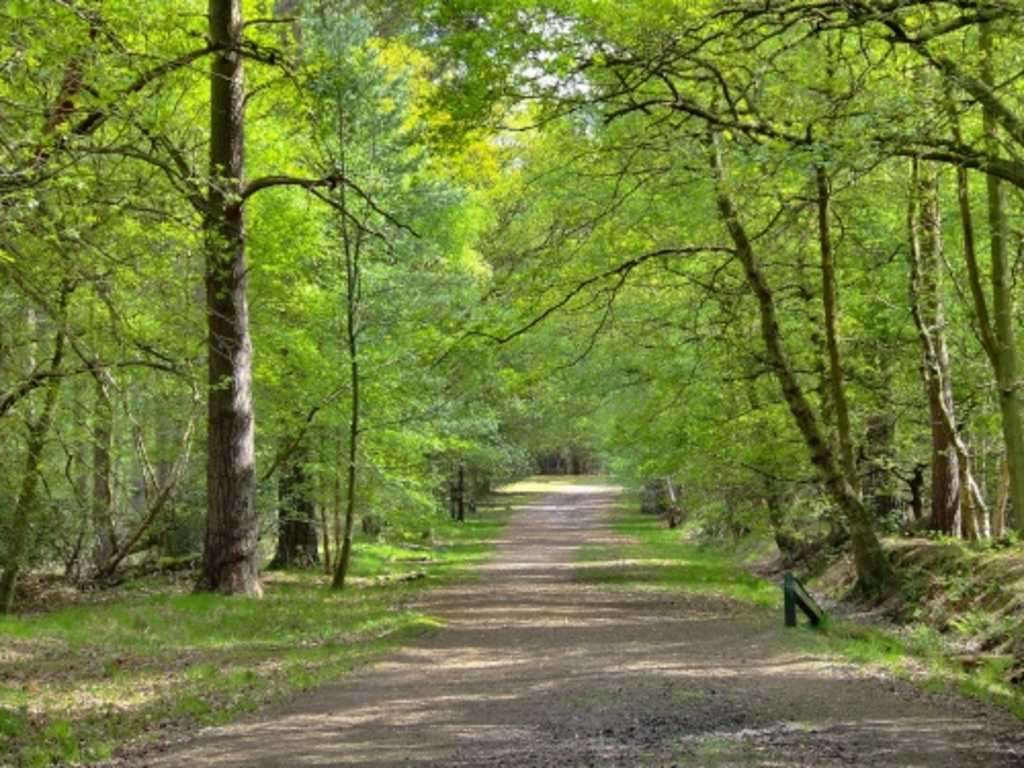 Swinley Forest - great for walking & cycling