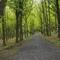 Orienteering/forest walks