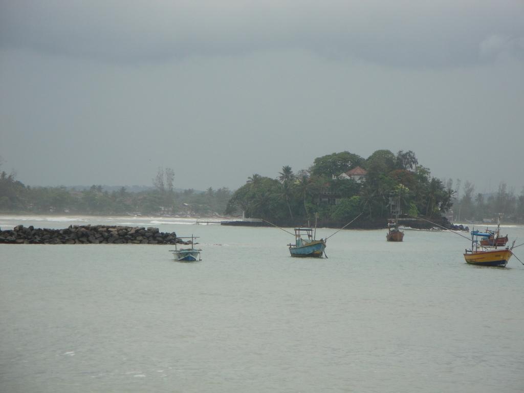Gorgeous Taproban in Sri Lanka
