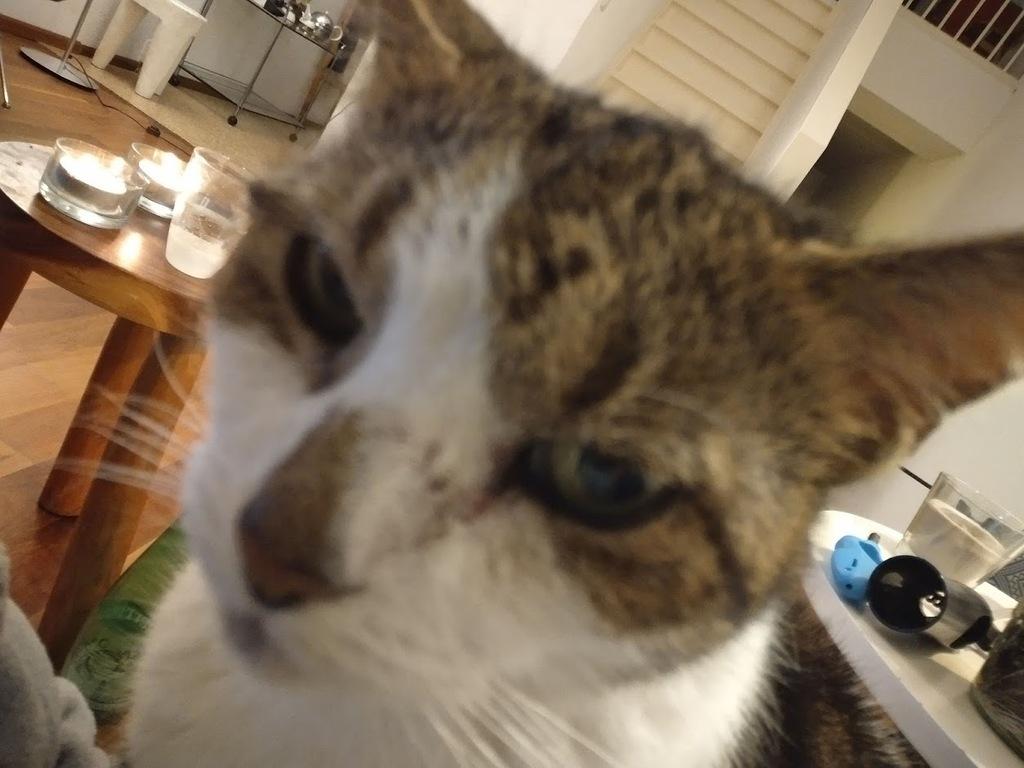 My cat Lena