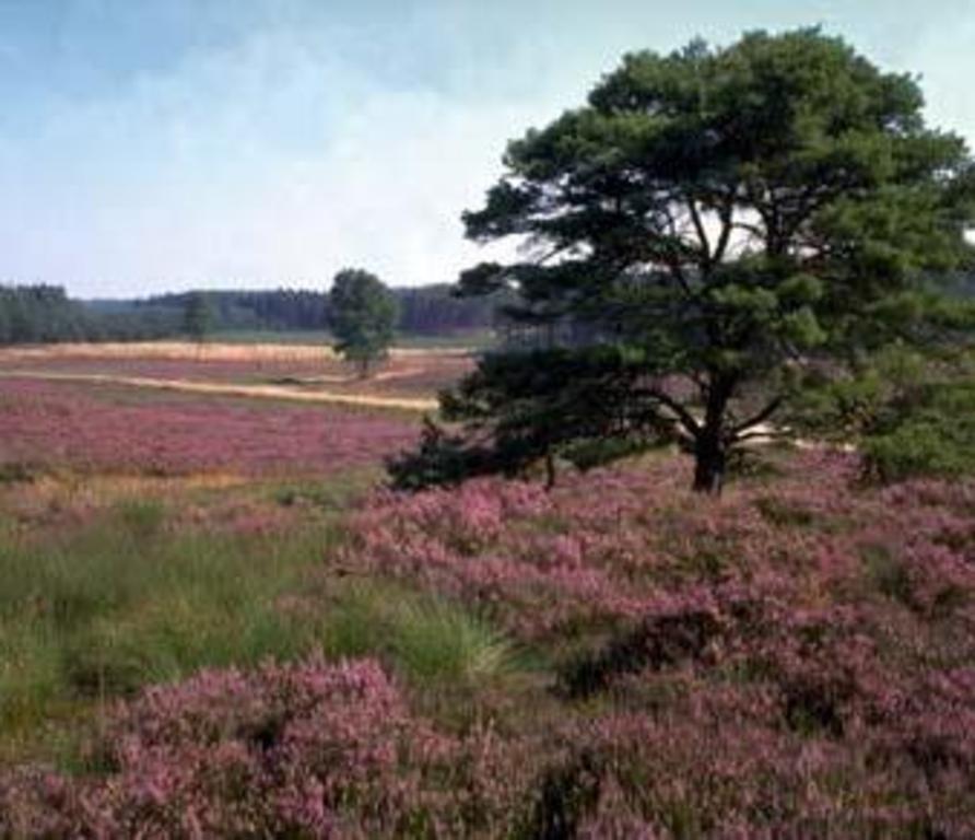 Heath nearby