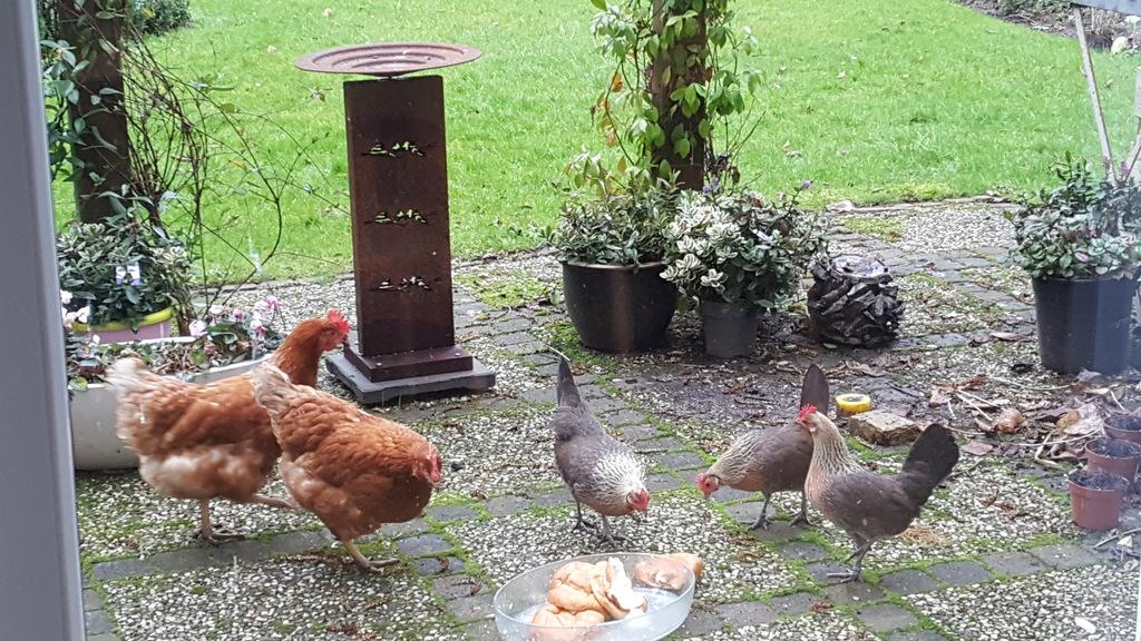 our chicken