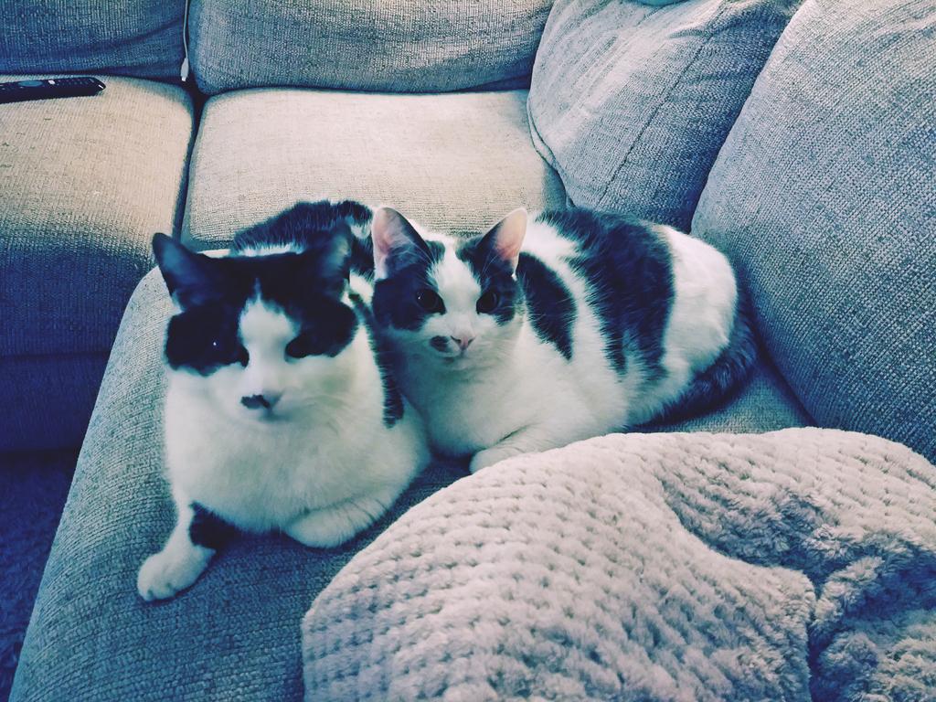 Amigo & Diego