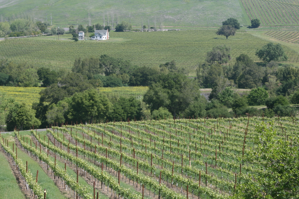 Napa and Sonoma vineyards 1 hour drive